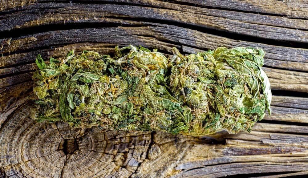 Tangerine Dream Cannabis Strain in Wasilla, AK | Bad Gramm3r